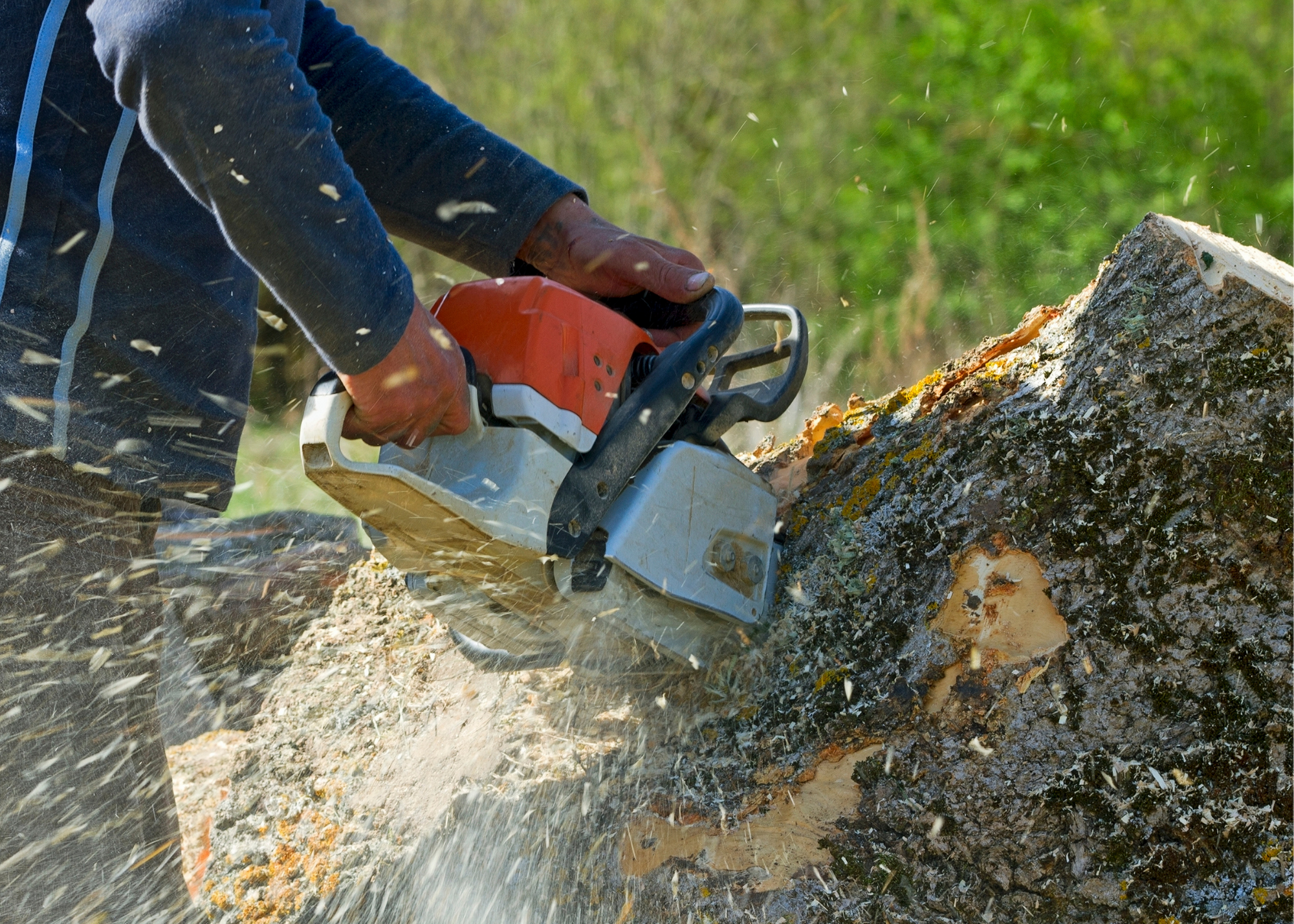 tree trimming service Medford OR
