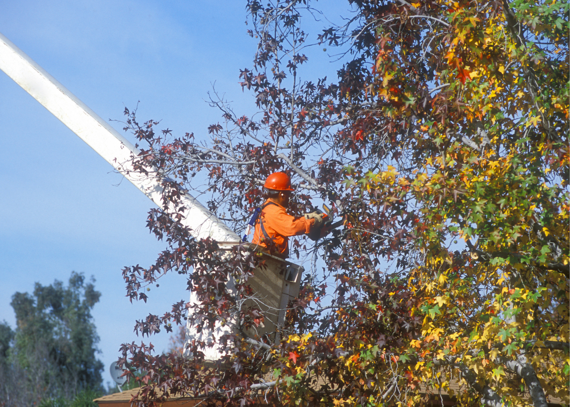 tree trimmers Medford